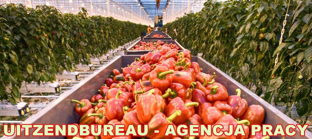 e91c8465a7aa68 Lista agencji pracy zatrudniających Polaków w Holandii