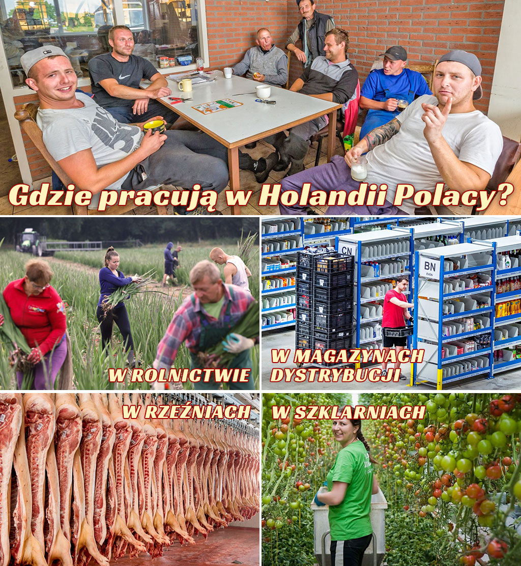 Praca Holandia Bez Agencji