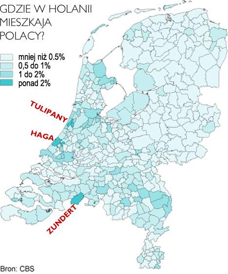 my w Holandii