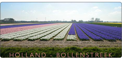 Holandia - region tulipanów