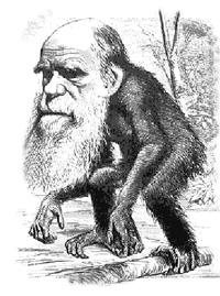 Darwin jako małpa