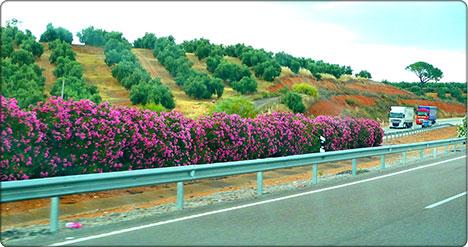 droga w Andaluzji