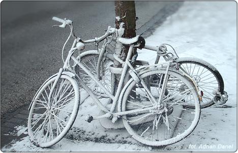 holenderska zima