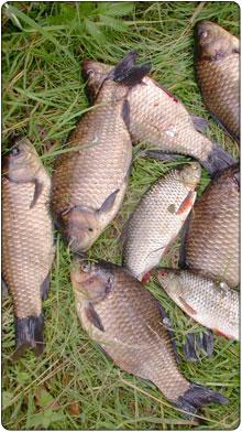 ryby slodkowodne