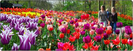 park tulipanów Keukenhof