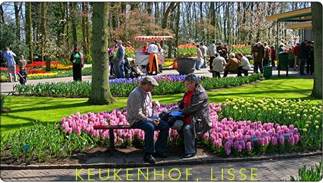 ogrody tulipanów Keukenhof