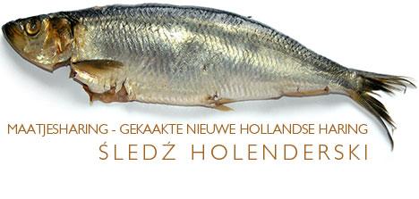 holenderski śledź